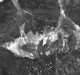 MODIS/MCD43A4_006_BAI